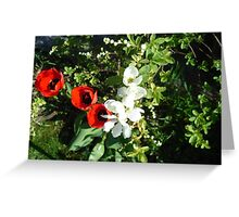 Bride Shrub and 3 Tulips  Greeting Card