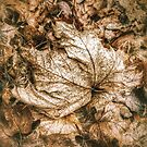 Fallen Sycamore Leaf by Graham Prentice