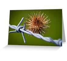 Burr on the wire Greeting Card