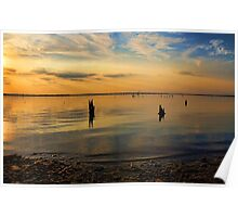Old Tree Stumps At Sunset Poster