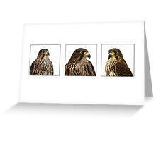 Wilson Triptych Greeting Card