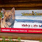 Sign, Sled dog race, Fairbanks, Alaska, 2012. by johnrf
