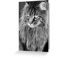 About to Pounce Greeting Card