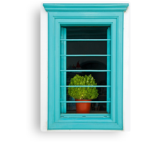 Window with basil Canvas Print