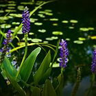 Beside the Koi Pond by Lightengr