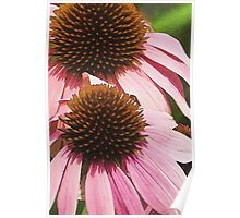 Pink Petals with Brown Tufts Poster