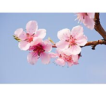 Delicate spring flowers. Photographic Print