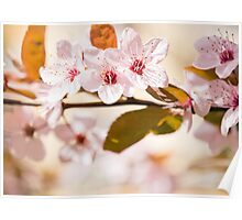 Delicate spring flowers. Poster