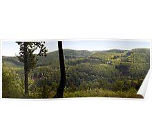 Vast forest. Poster