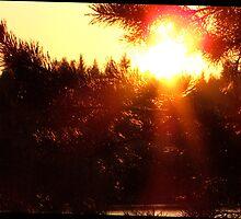 The Little Sun Had Clad Herself In Her Prettiest Red Cap by ArtOfE
