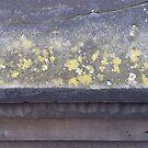 Lichen ledge by armadillozenith