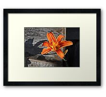 Orange Lily and Weathered Wood Framed Print