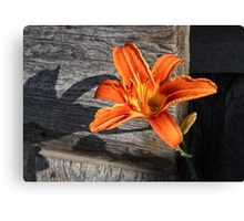 Orange Lily and Weathered Wood Canvas Print