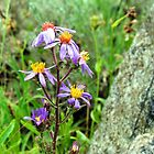 Mountain Wild Flower by Pbratt79