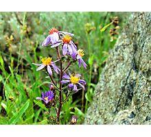 Mountain Wild Flower Photographic Print