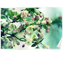 Crabapple Blooms Poster
