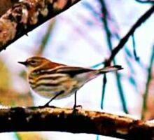 Lone Sparrow Sticker
