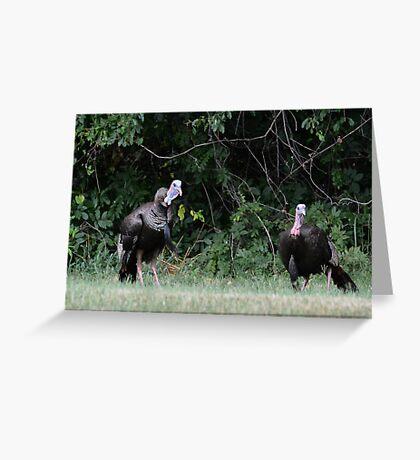 Turkeys - (Meleagris gallopavo) Greeting Card