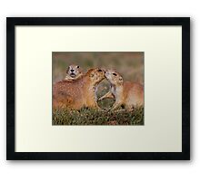 Where's My Sugar? Framed Print