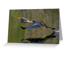 Anhinga Takeoff Greeting Card