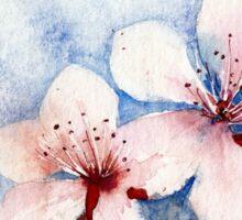 Prunus Blossom Sticker