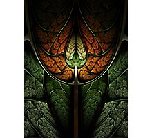 Elven forest Photographic Print