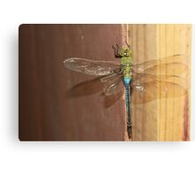 Dragon on the Back Porch Canvas Print