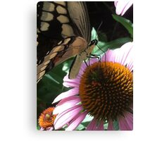 Butterfly - 2 Canvas Print