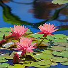 Pink Beauty in the Water by B.L. Thorvilson