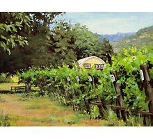 Vineyard View Photographic Print