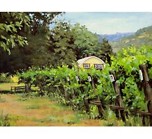 Vineyard View Photographic Print