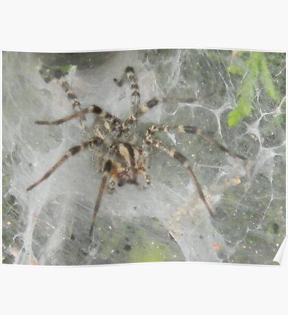 Spider, Spider! Poster