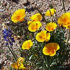 Arizona Wildflowers 2 by 2HivelysArt