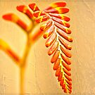 'Monbretia' and Ivy .. by Mike  Waldron
