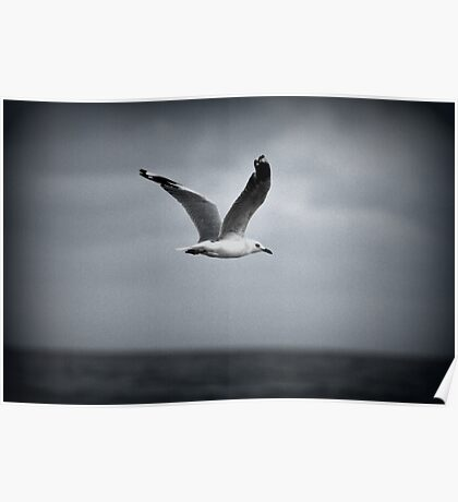 Seagull Brunswick Heads NSW Poster