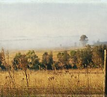 Foggy Hunter Valley fence by Sherilyn Hawley