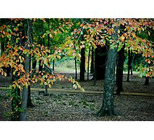 Fall at the park  Photographic Print