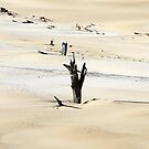 Sand Tool sand blow, Fraser Island, Qld. by Patricia  Knowles