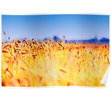 Tarwe field Poster