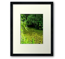 Swamp at the Zoo Framed Print