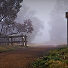 Walking Trail around the Pinnacle in Canberra during an Early Morning Fog by Wolf Sverak