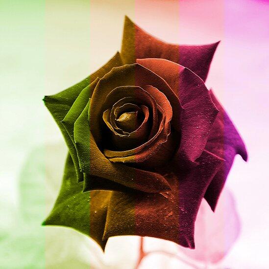 Fall Rose by Igor Shrayer