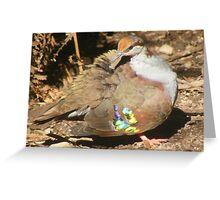 Does my wing look bright? Bush bronzewing - Phaps elegans Greeting Card