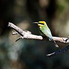 Rainbow Bee Eater by Stephen  Nicholson