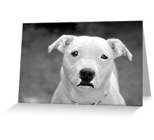 Just because I'm a Staffie Greeting Card