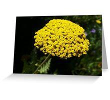 Yellow Yarrow Macro Greeting Card