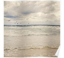 Seagulls take flight over the sea Poster