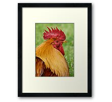 Gold Laced Cockerel Framed Print
