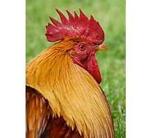Gold Laced Cockerel Photographic Print