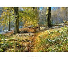 Lickey Hills by Andrew Roland